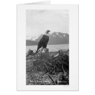 Bald Eagle Alaska 1920 Cards