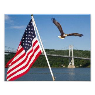 Bald Eagle (American Pride) Photo
