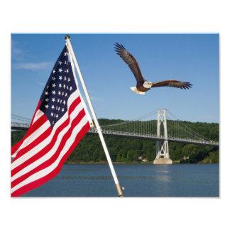 Bald Eagle (American Pride) Photographic Print