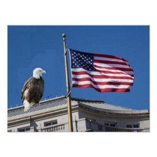 Bald Eagle And American Flag Print