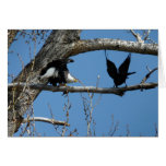 Bald Eagle and Raven Card