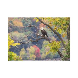 Bald Eagle Autumn Canvas Print
