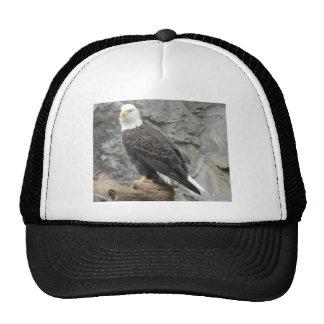Bald Eagle Baseball Hat