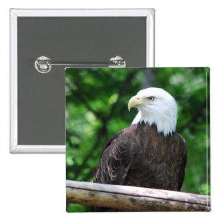 Bald Eagle Bird Pin