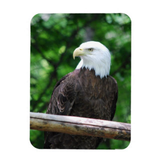 Bald Eagle Bird Premium Magnet Rectangle Magnet