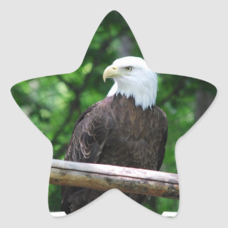Bald Eagle Bird Stickers