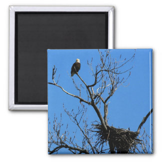 Bald Eagle by its nest magnet