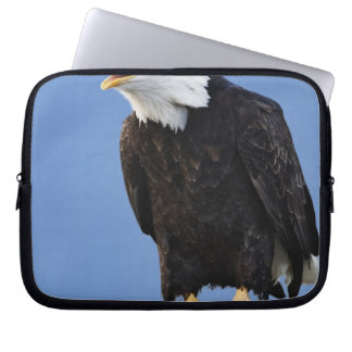 Bald Eagle calling, Homer, Alaska, Haliaetus Computer Sleeves
