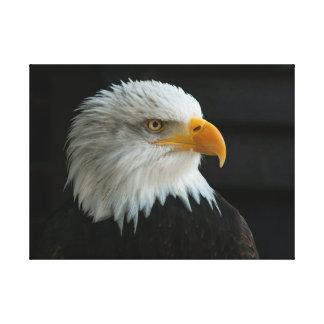 BALD EAGLE CANVAS PRINT