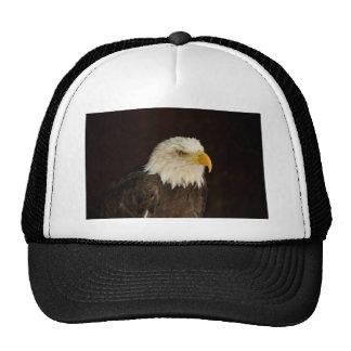 Bald Eagle Cap
