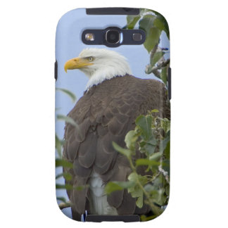 Bald eagle galaxy s3 cases