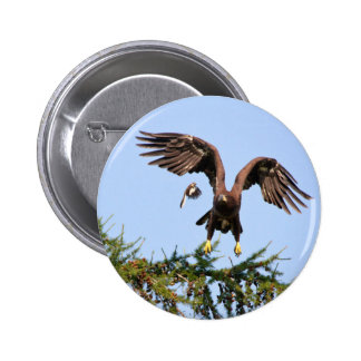 Bald Eagle Chased by a mockingbird 6 Cm Round Badge
