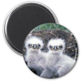 Bald Eagle Chicks 6 Cm Round Magnet