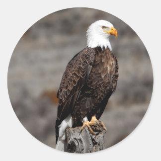 Bald Eagle Classic Round Sticker