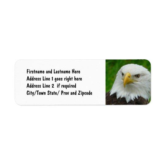 Bald Eagle - Close up Wild Eagle Photo
