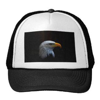 Bald Eagle copy.jpg Cap