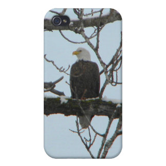 Bald Eagle Covers For iPhone 4