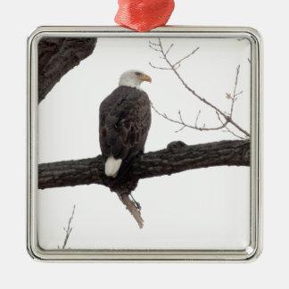Bald Eagle Christmas Tree Ornaments
