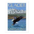 Bald Eagle Diving - Glacier National Park, MT Postcard