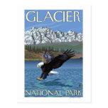 Bald Eagle Diving - Glacier National Park, MT Post Card