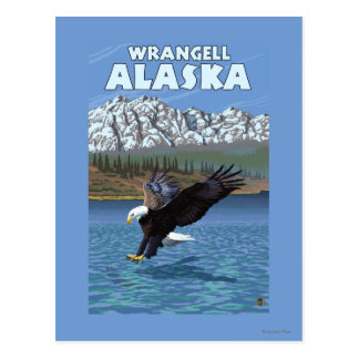 Bald Eagle Diving - Wrangell, Alaska Post Card