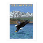 Bald Eagle Diving - Yellowstone National Park Postcard