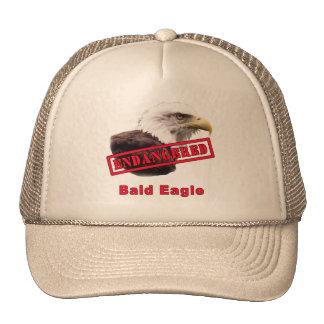 Bald Eagle Endangered Species Cap