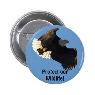 Bald Eagle Flight Collection II Buttons