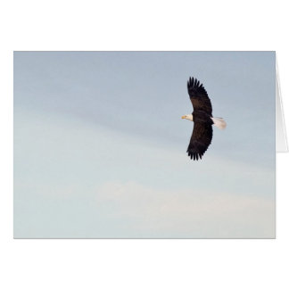 Bald Eagle flying Card