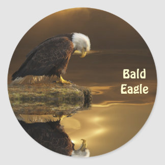 Bald Eagle GRATITUDE Wildlife Photography Classic Round Sticker