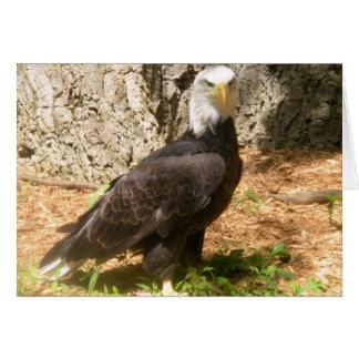 Bald Eagle! Greeting Card