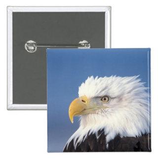 bald eagle, Haliaeetus leuccocephalus, 15 Cm Square Badge