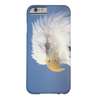 bald eagle, Haliaeetus leuccocephalus, Barely There iPhone 6 Case