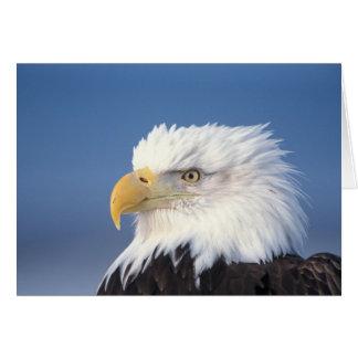 bald eagle, Haliaeetus leuccocephalus, Card