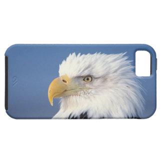 bald eagle, Haliaeetus leuccocephalus, iPhone 5 Case