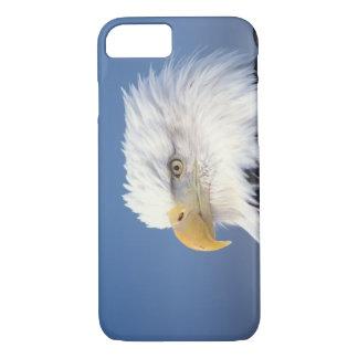bald eagle, Haliaeetus leuccocephalus, iPhone 7 Case
