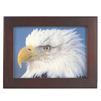 bald eagle, Haliaeetus leuccocephalus, Keepsake Box