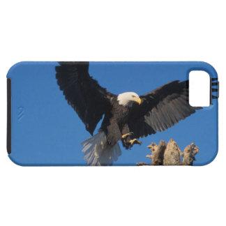 bald eagle, Haliaeetus leuccocephalus, landing Case For The iPhone 5