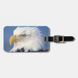 bald eagle, Haliaeetus leuccocephalus, Luggage Tag