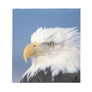 bald eagle, Haliaeetus leuccocephalus, Notepad