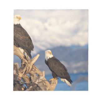 bald eagle, Haliaeetus leuccocephalus, pair Notepad