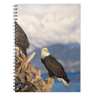 bald eagle, Haliaeetus leuccocephalus, pair Spiral Notebook