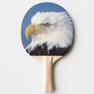 bald eagle, Haliaeetus leuccocephalus, Ping Pong Paddle