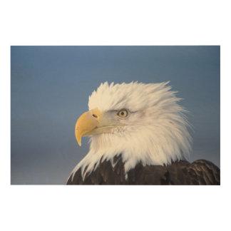 bald eagle, Haliaeetus leuccocephalus, Wood Wall Art