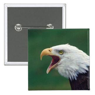 Bald Eagle (Haliaeetus leucocephalus) 15 Cm Square Badge