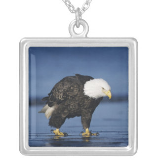 Bald Eagle, Haliaeetus leucocephalus,adult Silver Plated Necklace