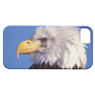 bald eagle, Haliaeetus leucocephalus, close up, 2 Case For The iPhone 5