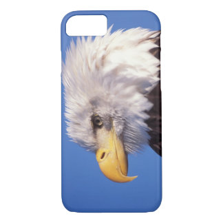 bald eagle, Haliaeetus leucocephalus, close up, 2 iPhone 8/7 Case