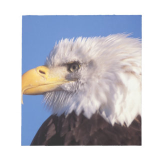 bald eagle, Haliaeetus leucocephalus, close up, 2 Notepad