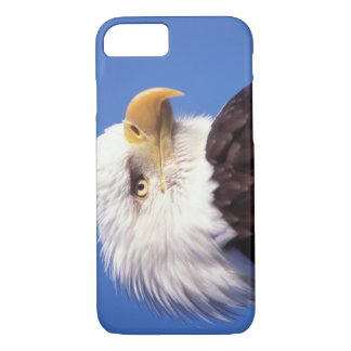 bald eagle, Haliaeetus leucocephalus, close up, 3 iPhone 8/7 Case
